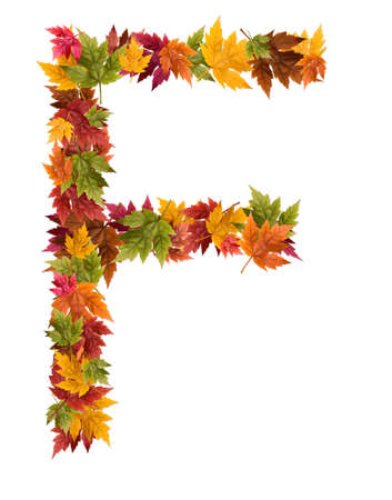The letter F made from autumn maple tree leaves. Stock Photo