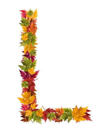 deciduous: The letter L made from autumn maple tree leaves. Stock Photo