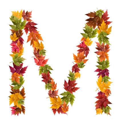 The letter M made from autumn maple tree leaves. Reklamní fotografie