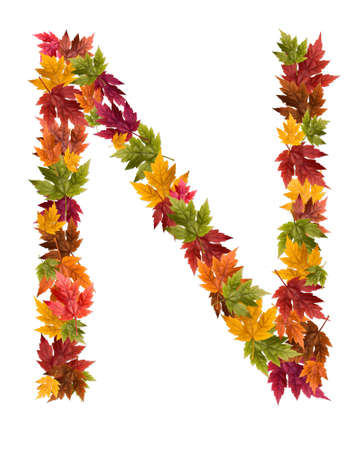 deciduous: The letter N made from autumn maple tree leaves. Stock Photo