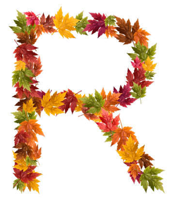 The letter R made from autumn maple tree leaves.