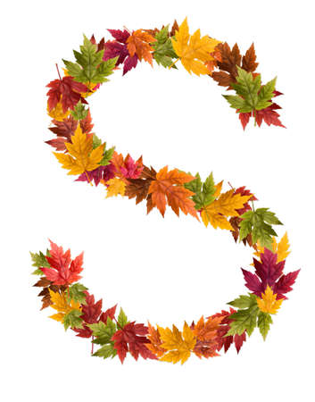 deciduous: The letter S made from autumn maple tree leaves. Stock Photo