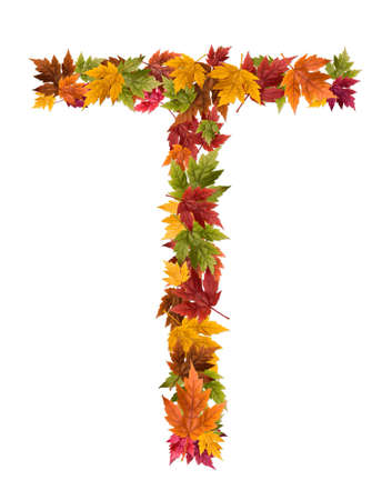 deciduous: The letter T made from autumn maple tree leaves.