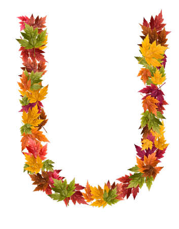 deciduous: The letter U made from autumn maple tree leaves. Stock Photo