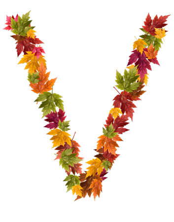 The letter V made from autumn maple tree leaves.