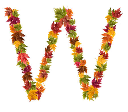 The letter W made from autumn maple tree leaves. Stock Photo