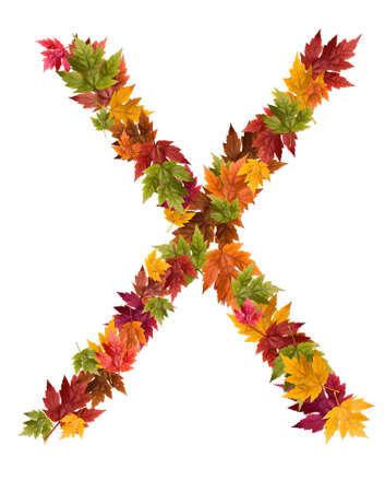 The letter X made from autumn maple tree leaves. Stock Photo