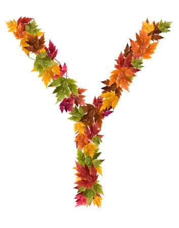 The letter Y made from autumn maple tree leaves. Stock Photo