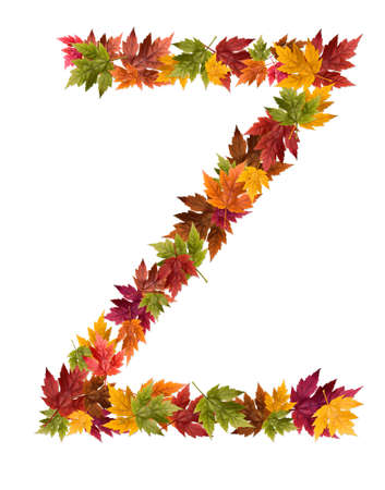 The letter Z made from autumn maple tree leaves. Stock Photo