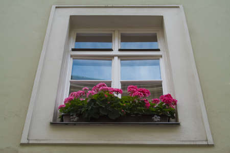Flowerbox and window Stock Photo