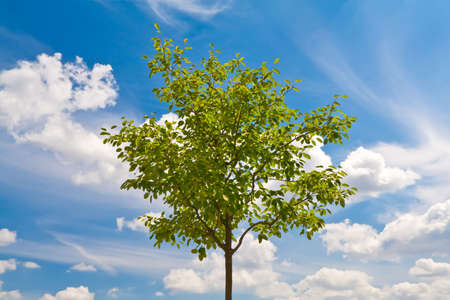 Green young tree on blue sky background