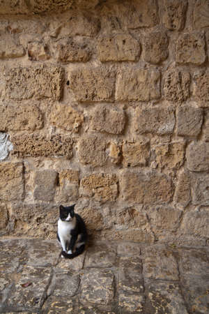 A street black and white cat near the old wall