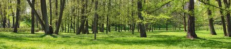 summer landscape, forest or park panorama. green nature