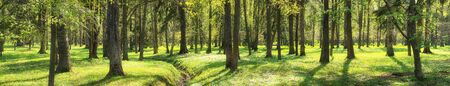 nature background. green grass and trees, forest panorama