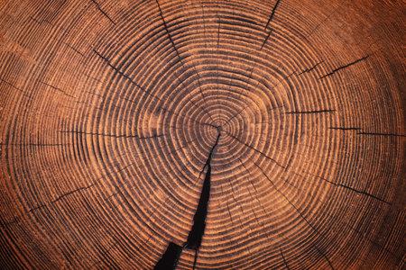 stump cut texture, tree rings wood background