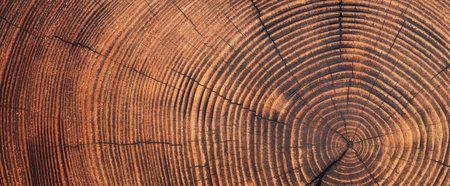 wood stump surface texture. cut ring pattern on wooden background 版權商用圖片