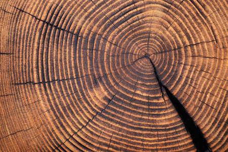 wood texture barn, stump surface cutaway background