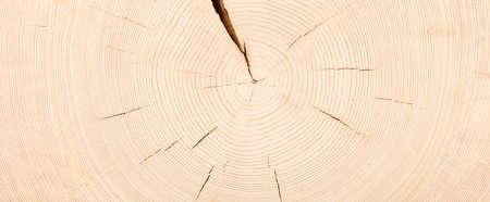 white wood stump background. trunk cut texture