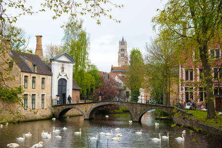 Swans in lake of love in Bruges, channel panoramic view near Begijnhof Redactioneel