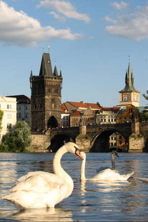 Svans at Prague photo