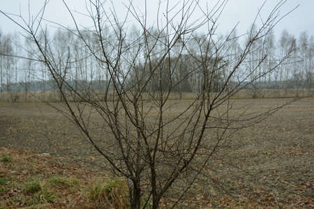 vicinity: Little tree nearby Zhar at Wroclaw vicinity