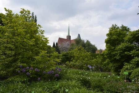 botanics: Trees in Wroclaw botanical garden