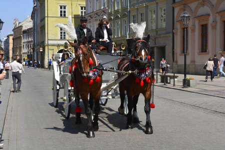 horse and carriage: Horse carriage in Krakow Editorial