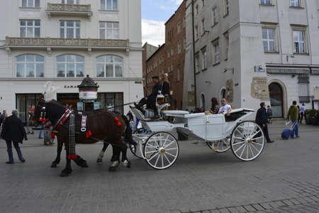 krakow: White horse carriage in Krakow