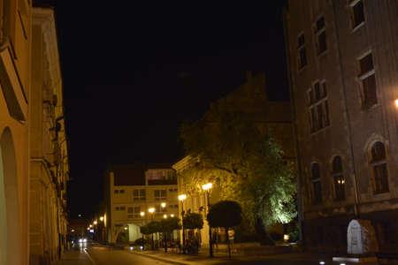 sicomoro: Sycamore nella notte