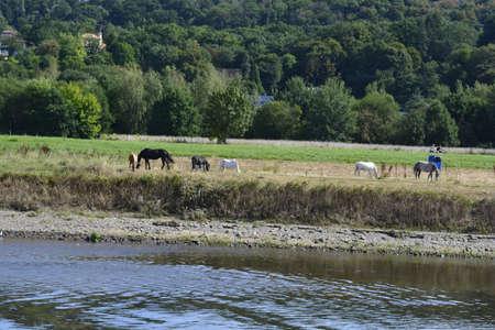 elba: Horses nearby Elba river
