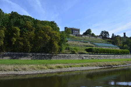 saxony: Vineyards of Saxony