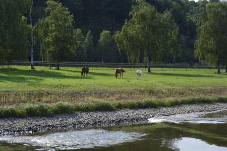 elba: Horses near Elba in Germany