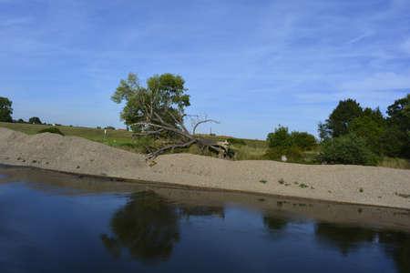 elba: Broken tree at Elba bank