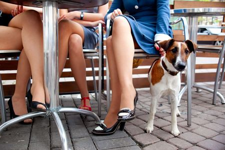 cute dog waiting his mistress while she's chatting with her friends Standard-Bild