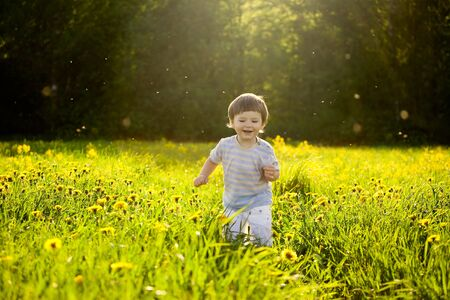happy cute little boy running through the field of dandelions in the sunset light