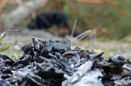 A pile of ashes of burnt papers. Specially Destroyed by fire documents outdoors. The concept of destruction of evidence or correspondence. Side view. Selective focus. Stock Photo