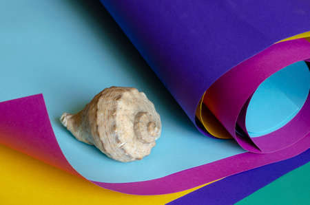 Creative colorful background with seashell. Rolls of colored paper of blue, lilac, yellow, turquoise color. Selective focus. Stok Fotoğraf