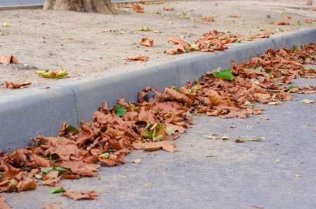Fallen leaves of sycamore tree on city street. Beautiful orange leaves at the curb on the road. Shooting at ground level. Selective focus.