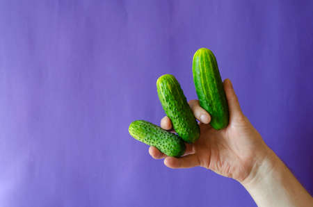 Green cucumbers in hand on a blue background. An adult man's hand holds three fresh cucumbers. Selective focus