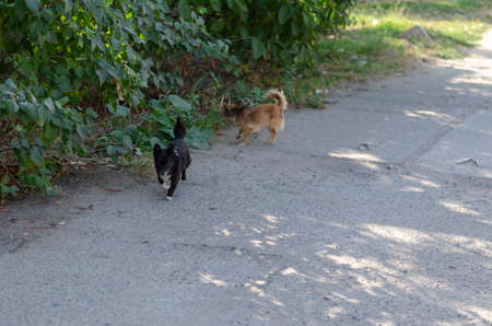 Two little cute stray dogs are walking along the street. Black and white and red dogs run merrily along the green bushes. Pets.