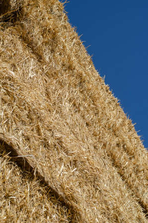 Piled stacks of dry straw collected for animal feed. Dry baled hay bales stack open air. Agribusiness.