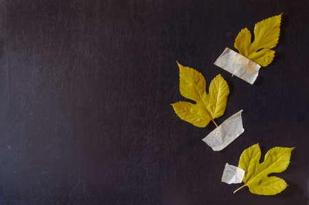 Creative multitask background with fallen leaves and duct tape on black background. Three leafs fixed with duct tape against solid textured background.