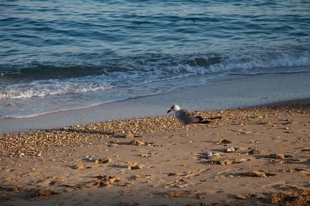 Seagull Bird on the beach by the sea