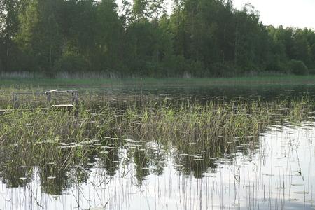 Lake Forest landscape nature fishing holidays nice