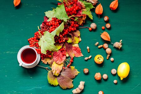 autumn yellow and Red leaves of berries fruits nuts fall 写真素材