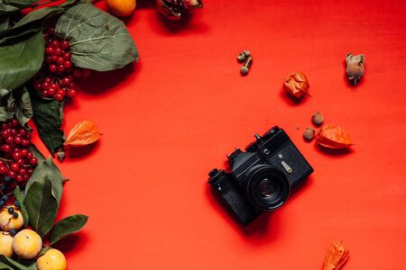 autumn background red yellow leaves nuts fruit 1 写真素材