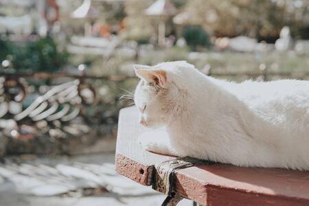 domestic cat sleeps basks in the sun