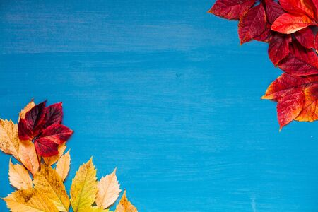 yellow autumn leaves on grey blue background