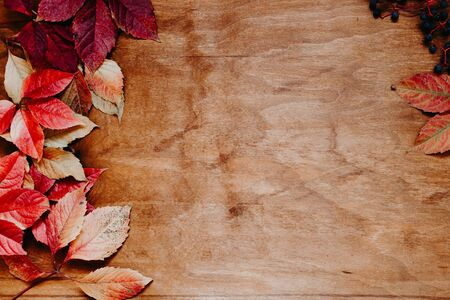 Red and yellow leaves of autumn wood background Stock Photo