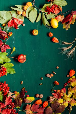 Red and yellow autumn leaves fruit nuts on green background 1 Imagens - 133628457